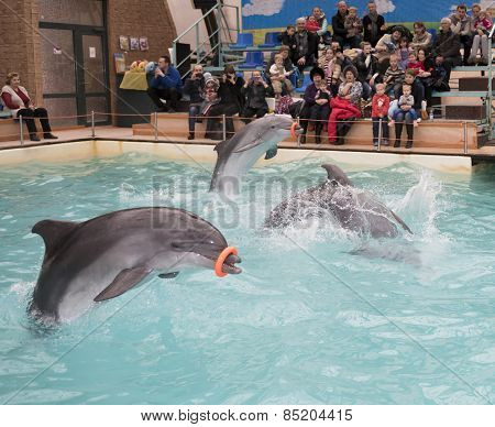 Dolphins -mom And Two Sons Perform Exercises With Rubber Rings
