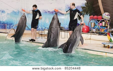 Dolphins - Mother And Two Sons Brought Trainers Rubber Rings