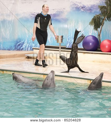 Sea Lion Goes On Flippers Under Coach