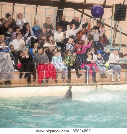 Dolphin Tail Throws The Ball In The Audience