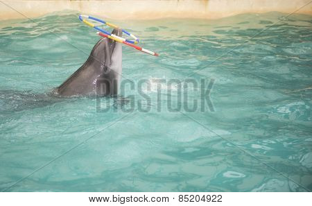 Dolphin Floats And Rotates The Nose Two Rings