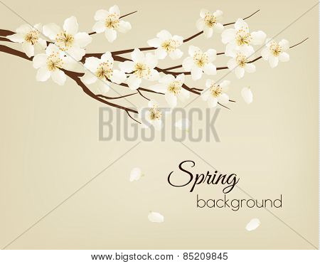 Blossoming tree brunch with spring flowers. Vector illustration.