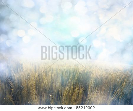 Yellow meadow under sky with  bokeh