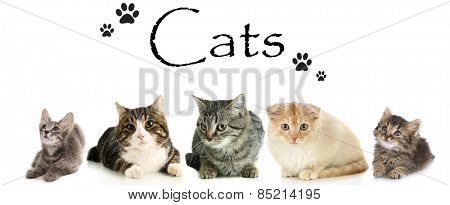 Cats isolated on white