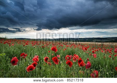 Stunning Poppy Field Landscape In Summer Sunset Light