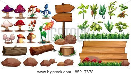 Mushrooms and different kinds of plants