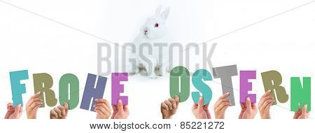 Hands holding up frohe ostern against white bunny facing camera