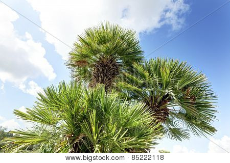 Palm Tree Against The Sky