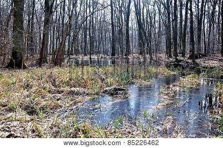 view of the flooded forest, Czech Republic, Europe