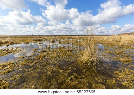 Spring scene on swamp under clouds in sky