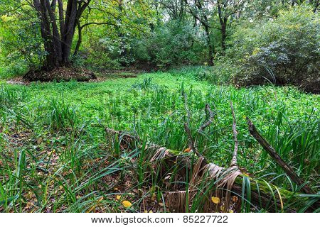 green bog in deep forest