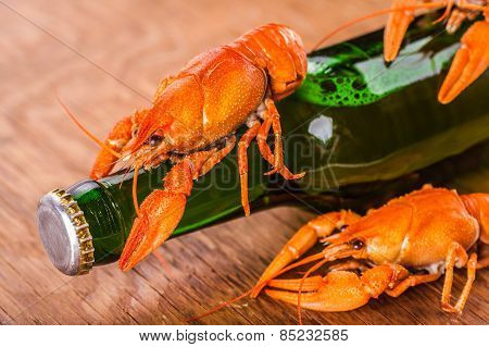 Beer In A Glass Bottle And Crayfish Close-up