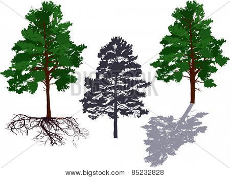 illustration with pine trees isolated on white background