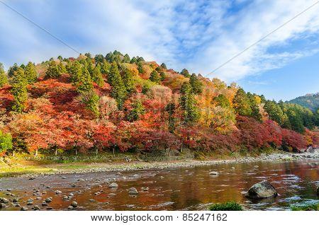 Colorful Autumn Leaf On The Mountain
