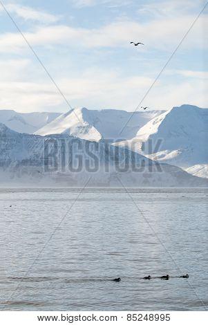 Skjalfandi Bay