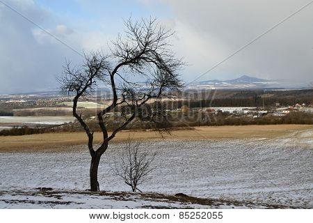 soloist tree