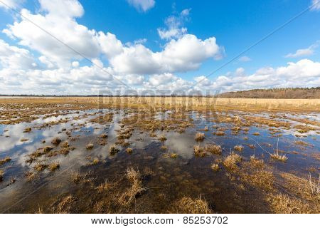 Nice spring day on bog under clouds in sky