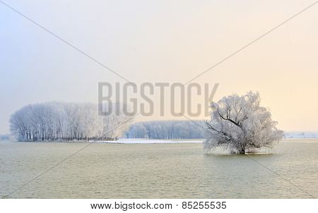 Danube river and frosty trees in morning time
