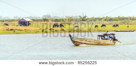CHAU DOC, VIETNAM - JANUARY 2, 2013: Rural life in Mekong delta- Fishermen on boat and cattle grazing at the riverside of Bassac River