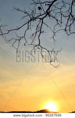 Branches backlit and a sunset sky background