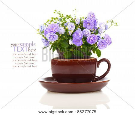 Blue Campanula Terry Flowers In Teacup,