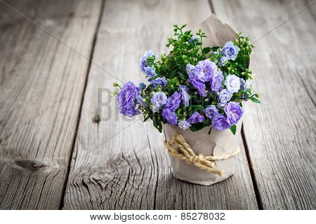 Blue Campanula Terry Flowers In Paper Packaging