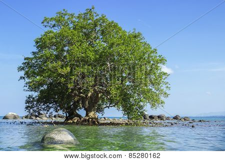 Mangrove In Area Of Low Tide And High Tide