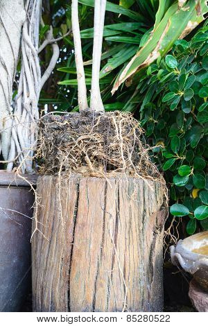 Tree Root With Soil On The Stump, Nature, Garden, Growth