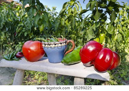 Growing Your Own Bio Vegetables In The Eastern Bulgaria