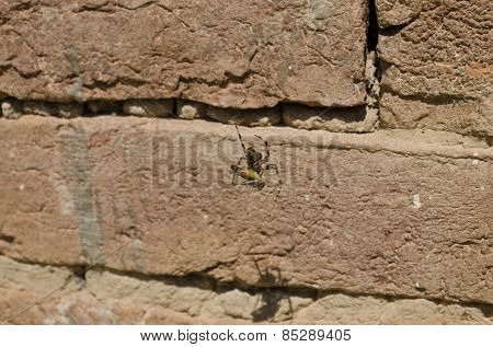 Spider And Hers Victim Caught In The Web Near The Brick Wall