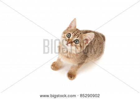 Kitten Lying On The Floor And Looking Up Isolated On White