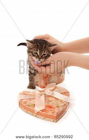Woman's Hands With Cute Kitten In Heart-shaped Box