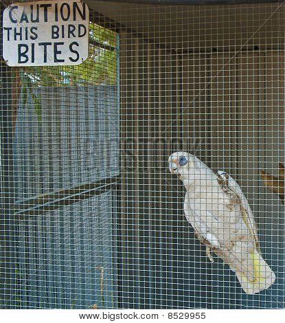 Caution: This Bird Bites