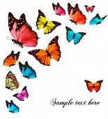 foto of flying-insect  - Background with colorful butterflies - JPG