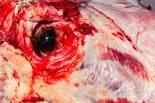 stock photo of moo-cow  - A dead cows eye looks out from it - JPG