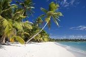 stock photo of west indies  - amazing island beach with palm trees in dominican republic - JPG