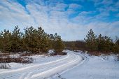 pic of snowy-road  - Landscape with snowy road in the winter through a pine forest - JPG