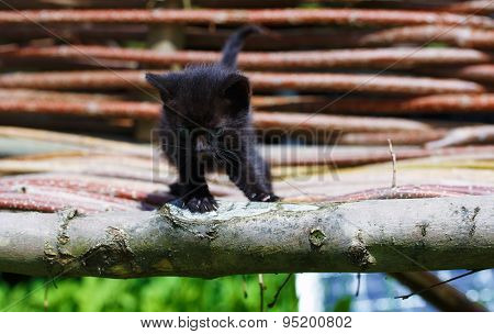 Black Kitten With Blue Eyes On Wood Chair.