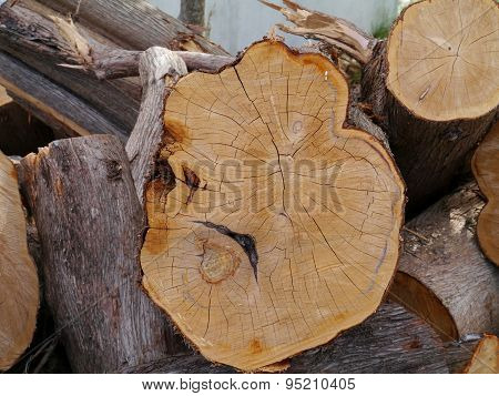 A  stack of freshly cut trees