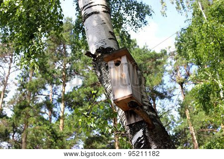 Birdhouse On The Birch