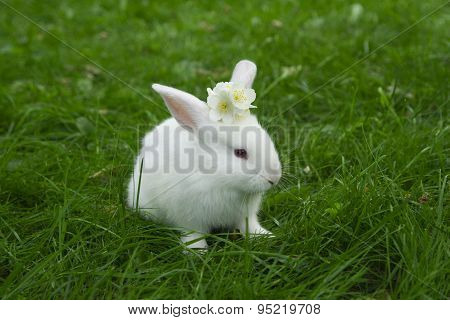 little white bunny sitting in green grass with jasmine