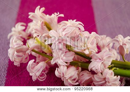Ffresh Flowers Hyacinths On Coloured Tablecloth