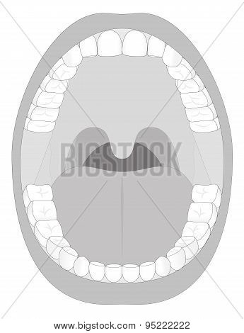 Mouth Teeth Jaw Outline