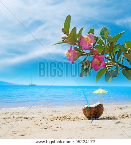 Coconut Under Pink Flowers By The Sea