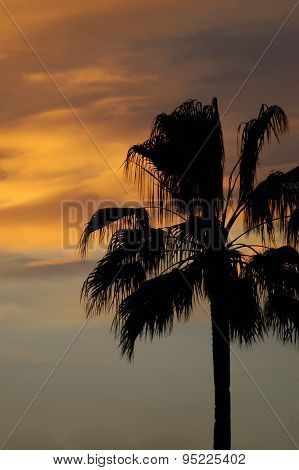 palm tree backlit at sunset