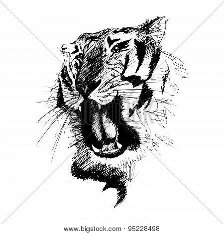 Vector Sketch Of Gnarling Tiger