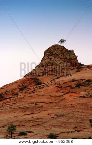 Lone Tree On Rock