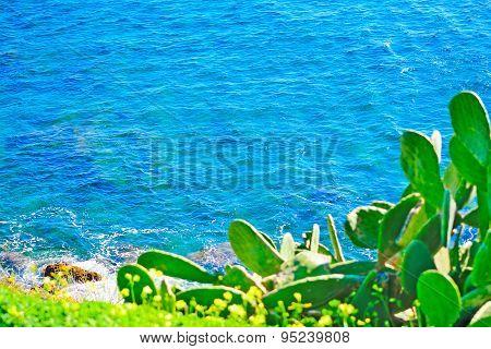 Green Cactus Over Alghero Blue Sea