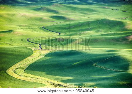 Wheat Fields In The Palouse