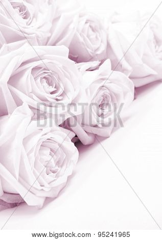 Beautiful Pink Roses Toned In Sepia As Wedding Background. Soft Focus.
